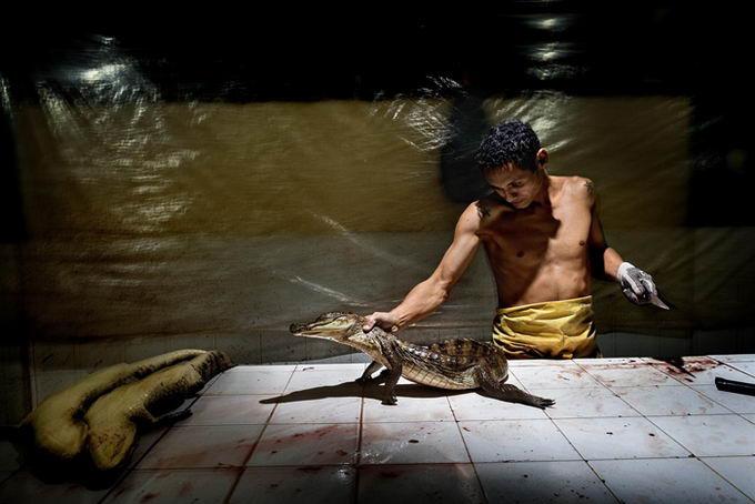 leather-crocodile-05